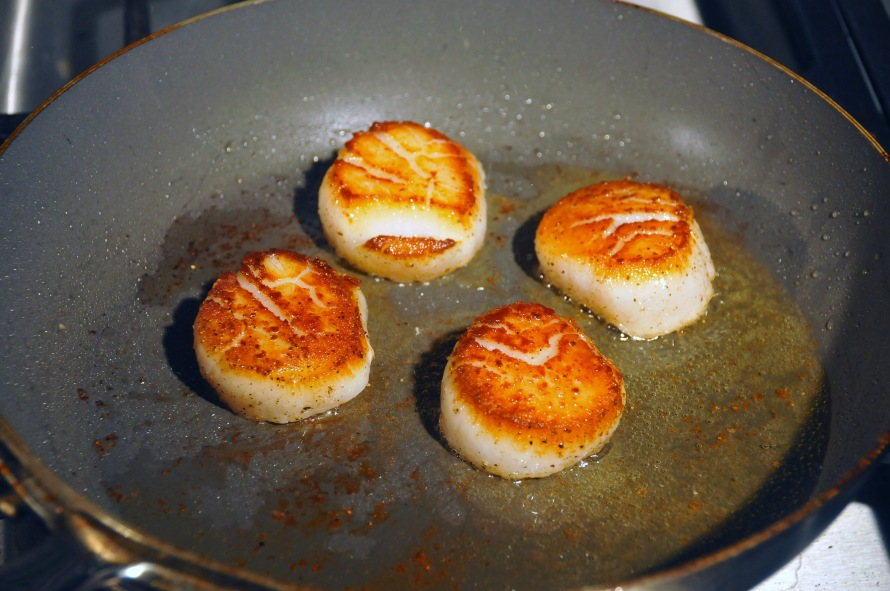 SBscallop2